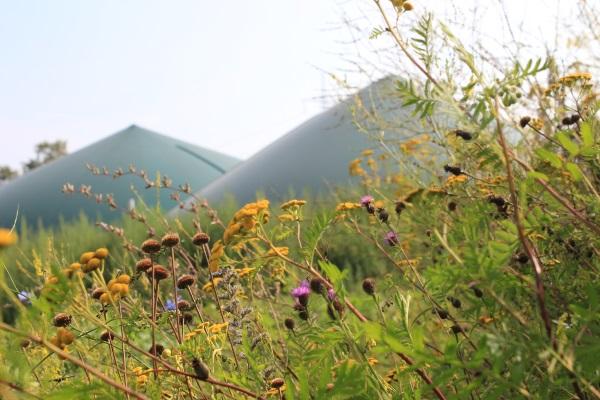 Energie aus Wildpflanzenkulturen
