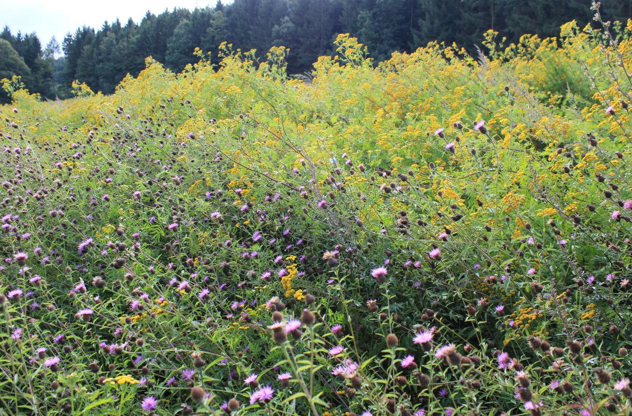 Wildpflanzen zur Biogasproduktion