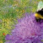 Praxishandbuch ÖVF, ökologische Vorrangfläche