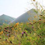 Biogas aus Wildpflanzen