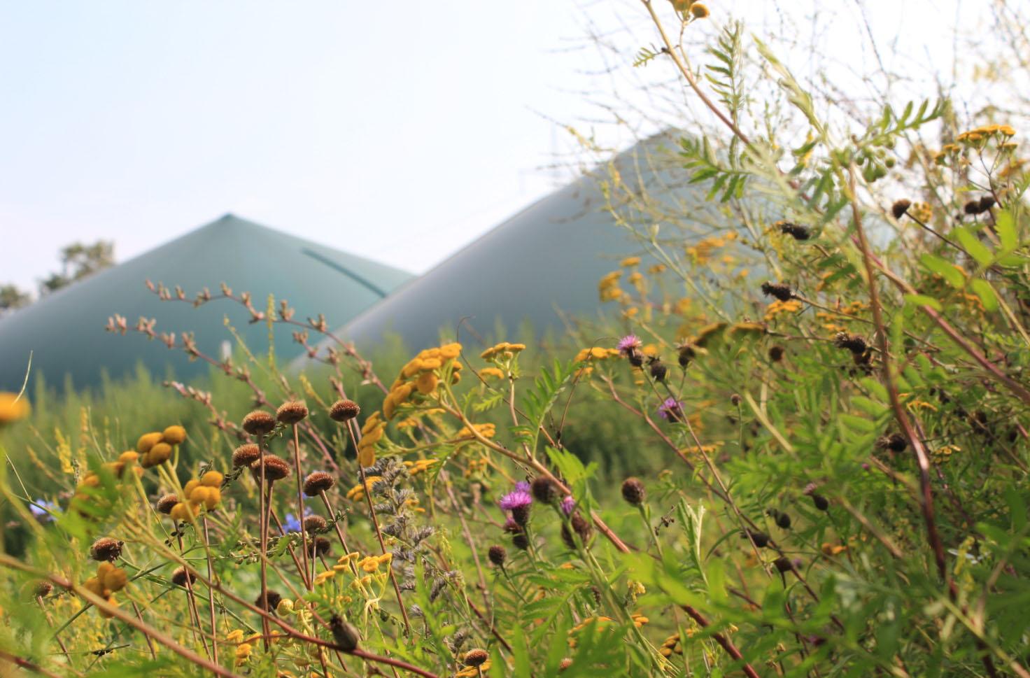 Biogas kann Artenschutz