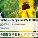 Praxisflächen Energiepflanzen