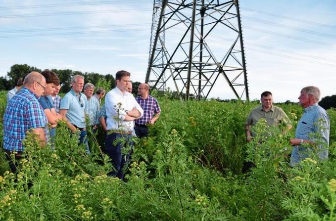 Wildpflanzen Biomasse Energie