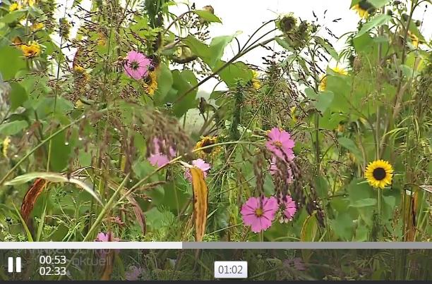 Energiepflanzen aus Wildpflanzen