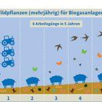 Biodiversität bei Biogas