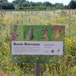 Bunte Biomasse (Foto: C.Kemnade)