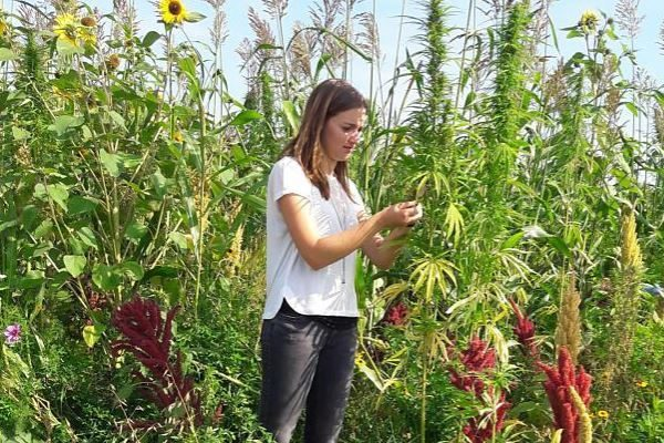 Wildpflanzenprojekt Rhön-Grabfeld hilft Wildbienen