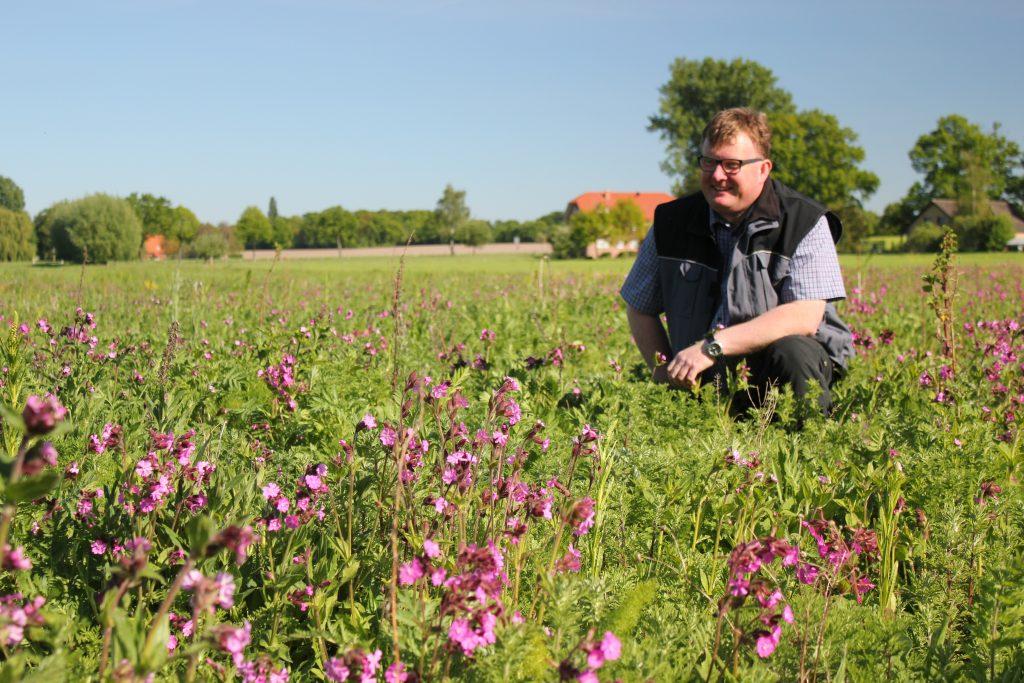 Landwirt Richard Schulte auf Wildpflanzenacker, im Vordergrund die Rote Lichtnelke (Silene dioica) (Foto: W. Kuhn)