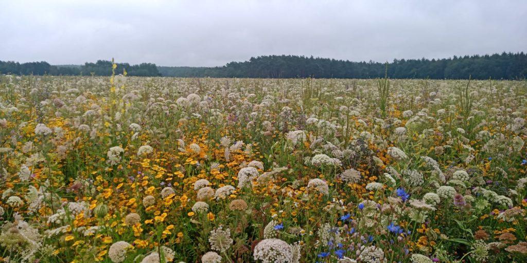 Bunte Biomasse im Juli (Foto A.Rugen)