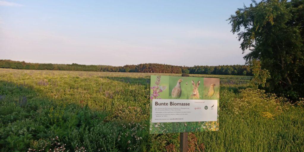 Bunte Biomasse im Juni